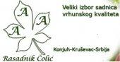 Rasadnik Čolić