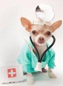 Dežurna Veterinarska ambulanta Caninus medic Voždovac